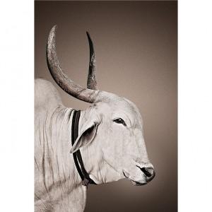 nomad-mascot-nandi-canvas-print