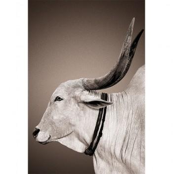 nomad-mascot-nandi-left-profile