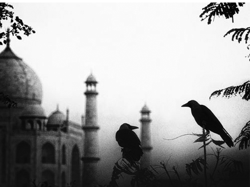 nomad-india-crows-birds-of-inspiration-2