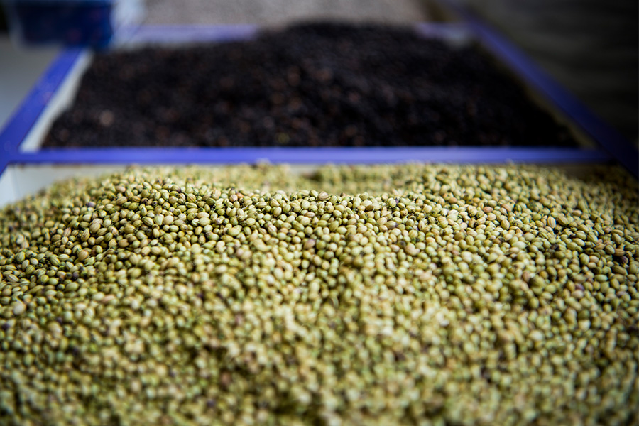 nomad-india-spices-of-india-3
