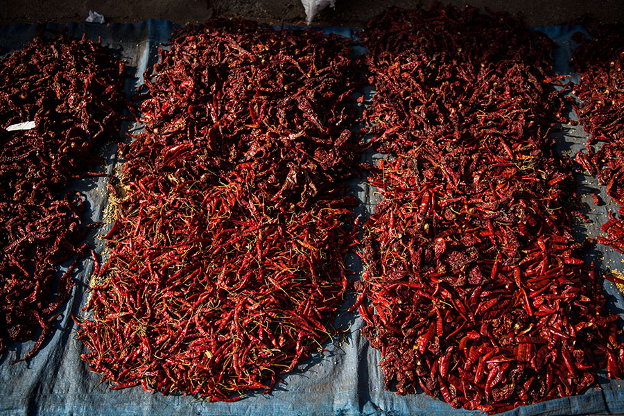 nomad-india-spices-of-india-5